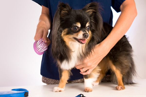 Pet Grooming Job : 10 Nontraditional Courses which will pay you 6 digit salary