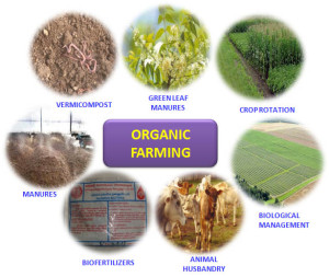 khcihdi, blog, vermicompostiing, biomanure, biofertilizer, animal husbandary, tillage, crop rotation, agriculture, indian farmer, Organic Farming & its Components