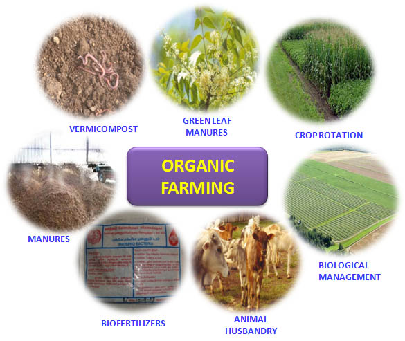 The Next Big Thing Amp Need Of Time Organic Farming