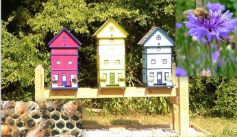Fascinating and Profitable: The Amazing Bees
