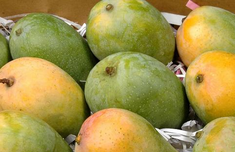 Delicious ripened mangoes on the beach11must watch