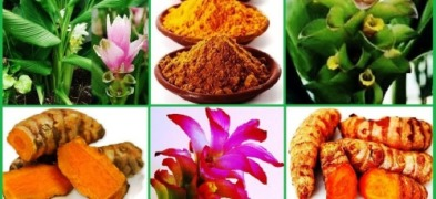 "Golden Treasure of Ayurveda : ""Turmeric"""