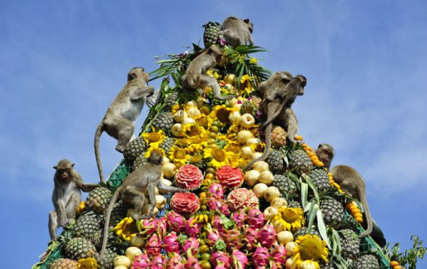 Monkey Buffet Festival, Lopburi, Thailand, the strangest festivals, Khmer dynasty, King Rama gave a piece of land known as Lopburi to Hanuman who was  the Monkey King