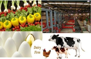CCEA Permitted Central Government agencies to invest beyond 26 percent in Mega Food Parks