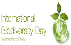 International Day for Biological Diversity (IDB) , created by the Second Committee of the UN General Assembly in late 1993, 22nd May