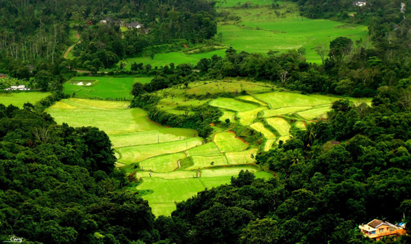 Coorg, Karnataka, 15 Places in India to Chill Out this Summer, Summer, Vacations, Coorg, Karnataka,  Islands of Lakshadweep, Majuli Island, Assam, Andamans, Deodar Forest, Himachal Pradesh, Kashmir, Ladakh, Leh, Matheran, Mizoram, Himalaya, Nanda Devi, Nohkalikai Falls, Cherrapunji, Valley of Flowers, Uttarakhand, Stok Range, Ladakh, Hill station, Tourism, Munnar, Tea garden, Yumthang Valley, Sikkim