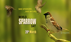 World Sparrow Day , 20th  March