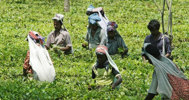 employees welfare fund in india According to manojit das gupta, secretary-general of indian tea  as west  bengal tea plantation employees welfare fund act, 2015, the.
