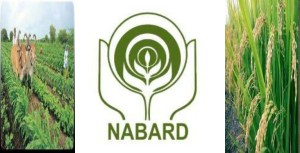 NABARD to provide Rs 30,000 crore credit to farmers for irrigation, khichdi, blog, general,knowledge, ias, ips, civil, services, CSAT,pre, ies, general studies, GS, mains, competitive, entrance, bank, PO, IBPS, current, affairs, may, 2015, blog, study, material, CSAT  june, july, current affairs, 7th July 2015, 10th july 2015, 13th july 2015, 14th july 2015, 8th july 2015, Aligarh Muslim University, Saeedul Hasan, Arif Kafeel Akhtar, Shagufta Qadri, Suhailur Rahman, Jawaharlal Nehru Medical College, Hemoglobin C disease, William Harvey Award, Union Ministry of Health and Family Welfare, Ministry of Skill Development and Entrepreneurship, Richard Verma, US Ambassador, Promoting Energy Access through Clean Energy, PEACE, PACESetter Fund, United States, US, 2015 Wimbledon Championship Titles of Tennis, 7th Global Film Festival 2015, Anupam Kher, Pallavi Joshi, Madrid Film Festival, Buddha In A Traffic Jam, Kyrgyzstan, Asian Development Bank, World Bank, Dr. Harsh Kumar Bhanwala, Mumbai, Pradhan Mantri Krishi Sinchai Yojana, PMKSY, GCF, Green Climate Fund, Irrigation, National Bank for Agriculture and Rural Development , NABARD, Narendra Modi, India, Turkmenistan , Fudan University, Tsinghua University, Peking University, QS University Rankings 2015, Supreme Court (SC) of India, Madhya Pradesh, Central Bureau of Investigation , Madhya Pradesh Professional Examination Board, CBI, Vyavsayik Pariksha Mandal, Abdulqawi Ahmed Yusuf, Yves Fortier , Rodrigo Oreamuno, Vodafone, Union Government, Tax case, Caid Essebsi, Barack Obama , United States of America, Tunisia, North Atlantic Treaty Organization, NATO, National Highway Authority of India , Udhampur, Jammu & Kashmir, Srinagar, Chenani and Nashri, Patnitop Tunnel, Prakash Javadekar, Sanjay Rajoria, Tata Steel, World Environment Foundation, Golden Peacock Environment Management Award, Chair of the Future Earth Engagement Committee, Union Environment and Forest Minister, Jairam Ramesh, Green Signals: Ecology Growth and Democracy in India