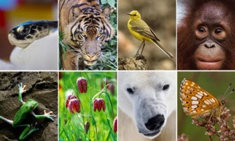 Biodiversity #  2 : All you need to Know || India