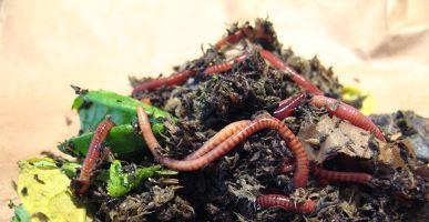 Vermicomposting: Earthworms are Farmer's Best Friend